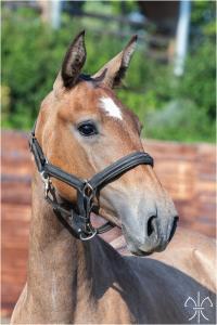 Photo cheval a vendre PRADA DE LA GESSE